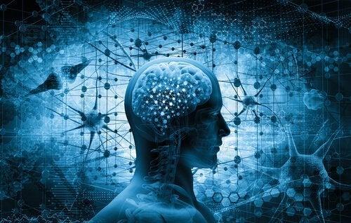 insan beyni resmi