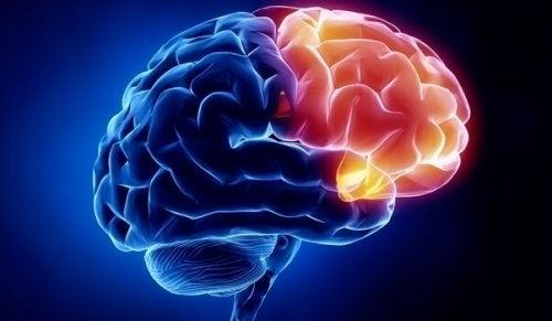 mavi ve sarı beyin