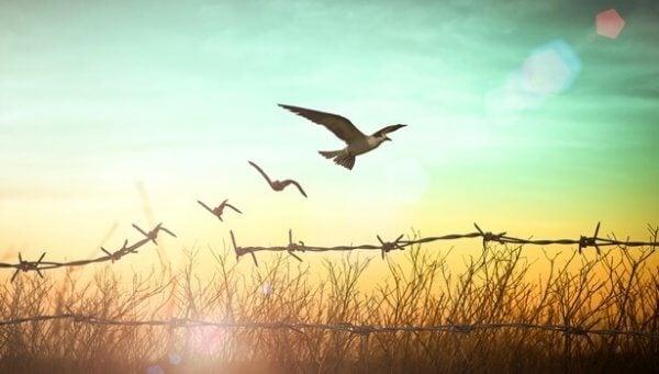 telden kaçan kuşlar