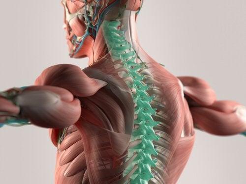 Omurilik Sıvısı: Merkezi Sinir Sisteminin Oluşumu