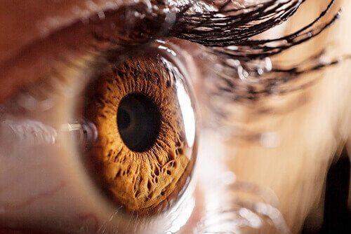 kahverengi göz bebeği