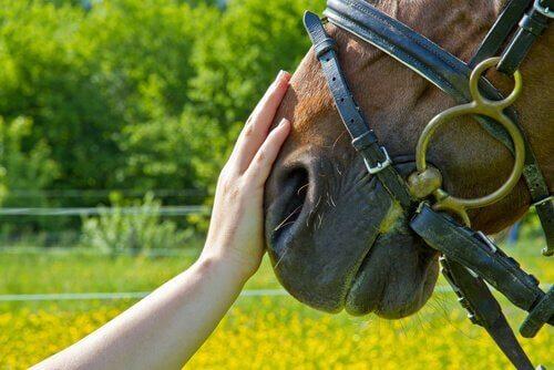 at yardımlı terapi