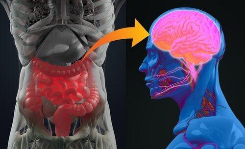 bağırsak bakterileri ilüstrasyon