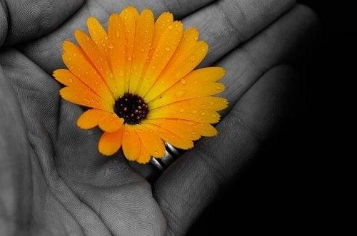 çiçek tutan el