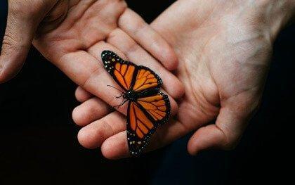ellerinde kelebek
