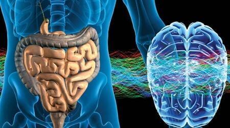 Enterik Sinir Sistemi: İkinci Beyin