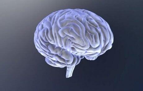 insan beyni şekli