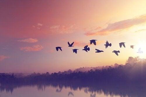 göç eden kuşlar