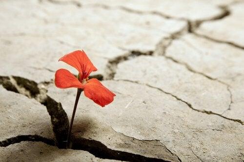 taştan çıkan dirençli çiçek