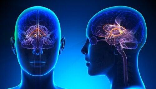 limbik sistem