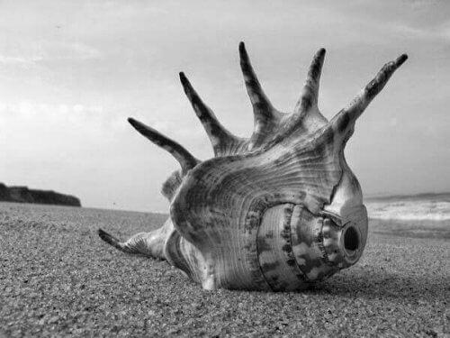 sineklerin tanrısı deniz kabuğu