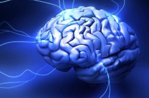 sürüngen beyni nöronları
