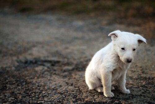 üzgün köpek yavrusu