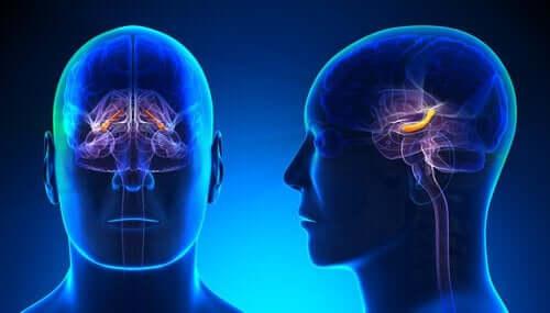 aydınlık bölümlü beyin grafiği