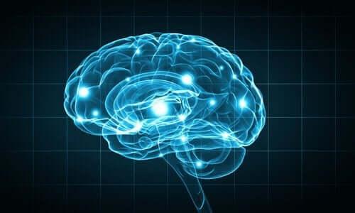 insan beyni ve sinirler