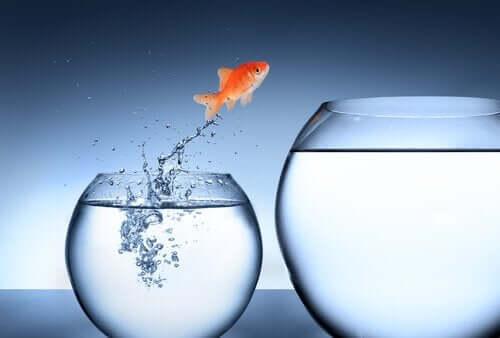 küçük akvaryumdan büyük akvaryuma atlayan minik balık