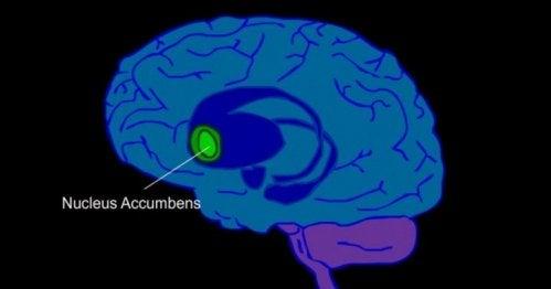 beynin ödül merkezi ilüstrasyonu
