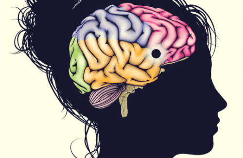 Beynin Ödül Merkezi: Öğrenme, Motivasyon ve Zevk Merkezi