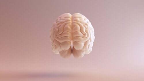 3d beyin