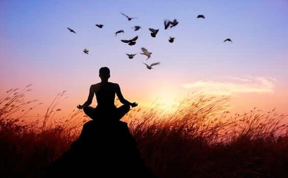 Budist rahip ve kuşlar