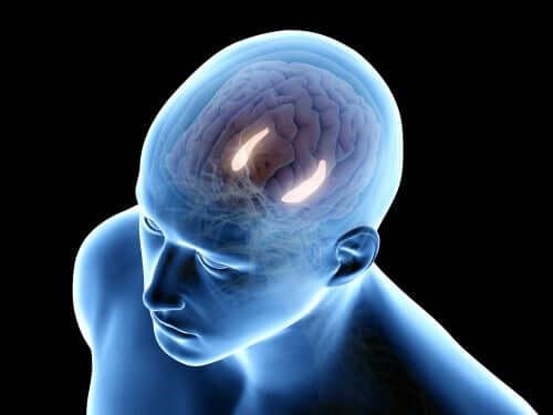 Hipokampus insan beyni