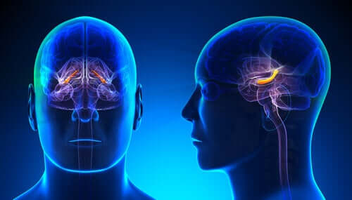 Hipokampal Formasyon: Yapısı ve Özellikleri