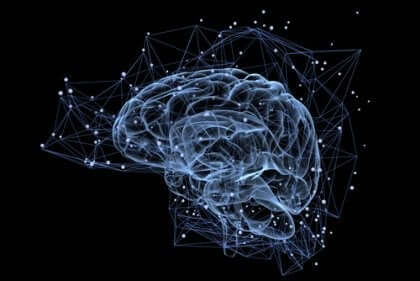 insan beyni bağlantıları