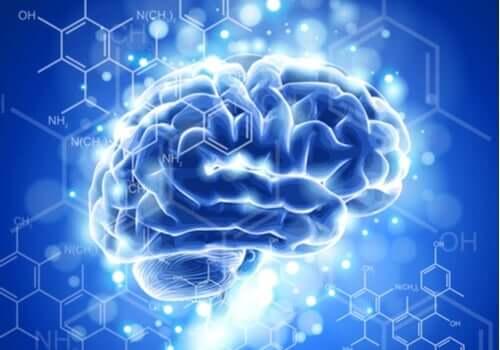 Nöroetik Özellikleri ve Gelişimi
