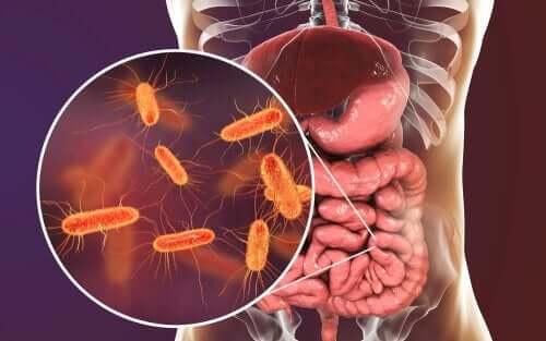 bağırsak bakterileri