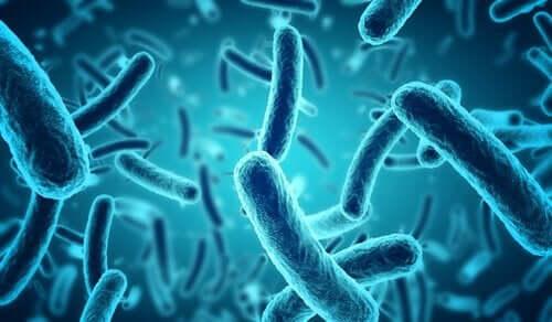 mavi bakteriler
