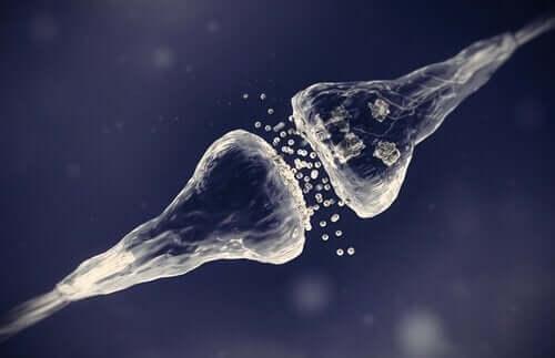 Başka bir sinaps yapma tipinin örnek görseli.