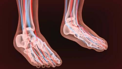 Ayak sinirlerinin bir çizimi.