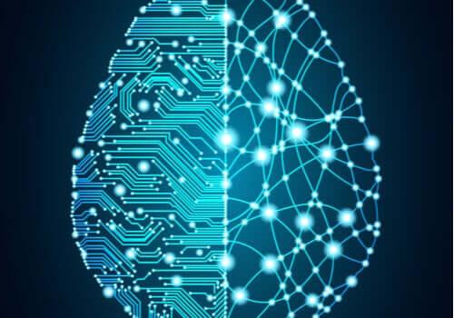 Beynin yapısı ile ilgili bir görsel