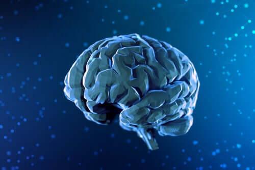 Dijital beyin çizimi