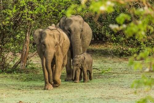 Bir fil ailesi.