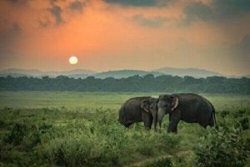 Üzgün Filler: Gerçek Bir Hikaye
