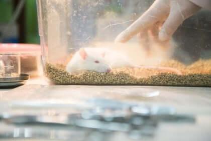 kafes içinde fare parkı deneyi