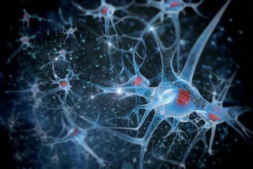 nöron görseli