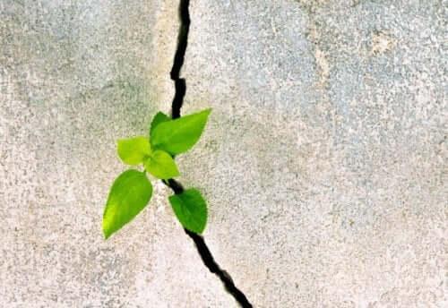 Betondaki bir çatlaktan çıkmış bir bitki.