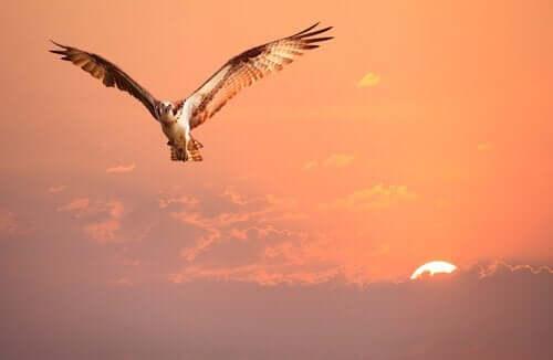 Kimlik Hakkında Bir Hikaye: Kim Olduğunu Bilmeyen Kuş