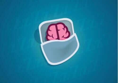 Uyku Sırasında Nöronlarımıza Ne Olur?
