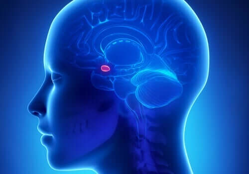 Bir amigdala illüstrasyonu.