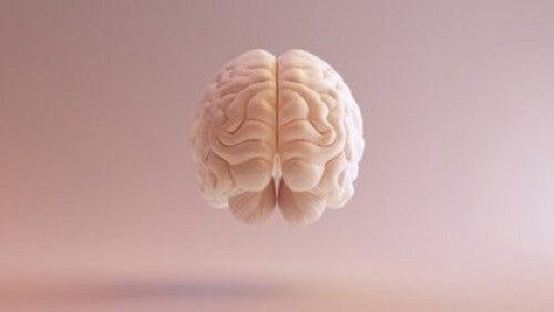 Bir beyin çizimi.
