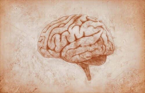 depresyon kalıtsal mıdır, beyin