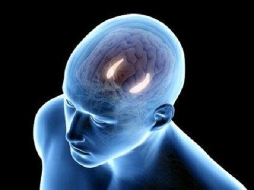 İnsan hipokampüsünün temsili bir illüstrasyonu.