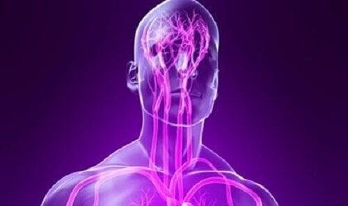 Bir sinir sistemi çizimi.
