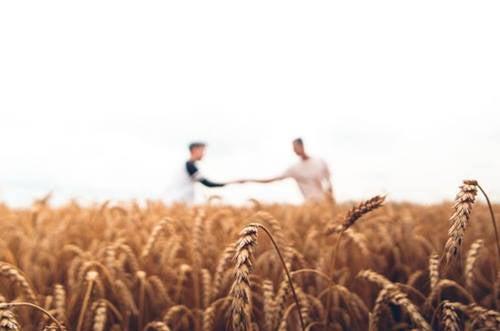 Bir tarlanın ortasında birbirlerinin elini tutmuş iki erkek.