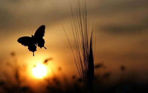 Güneşe doğru uçan kelebek