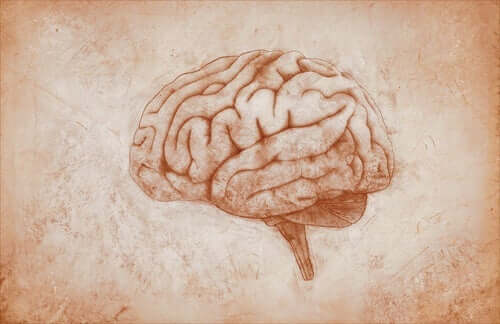 kahverengi renkte beyin çizimi