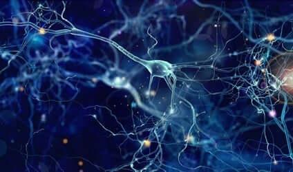 izole beyin nöronları
